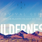 What to Eat In the Wilderness: a Survival Guide